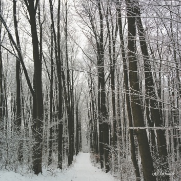 Berlin Photography - Forest and trees with Snow